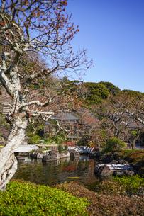 長谷寺庭園の写真素材 [FYI04813598]