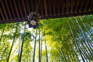 長谷寺の釣り灯籠と竹林の写真素材 [FYI04813615]