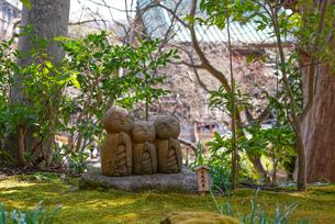 長谷寺良縁地蔵の写真素材 [FYI04813620]