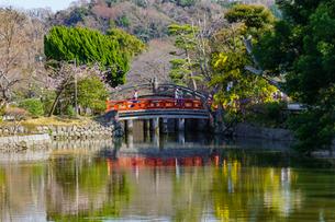 鶴岡八幡宮平家池と赤い橋と太鼓橋の写真素材 [FYI04813623]