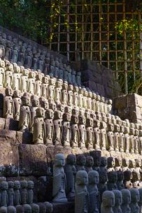 長谷寺地蔵堂と竹垣とレンギョウの花の写真素材 [FYI04813625]