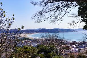 長谷寺から眺める由比ヶ浜と木蓮の写真素材 [FYI04813626]