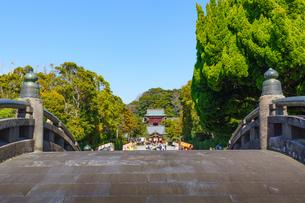 鶴岡八幡宮太鼓橋越しに見る境内の写真素材 [FYI04813646]