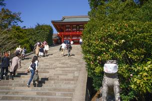 鶴岡八幡宮の大石段と狛犬の写真素材 [FYI04813652]