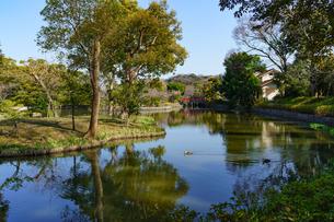 鶴岡八幡宮の平家池と鴨の写真素材 [FYI04813658]