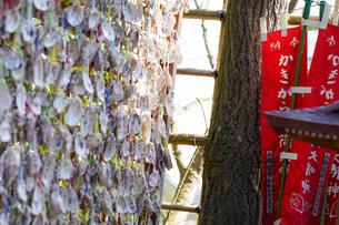 長谷寺のかきがら稲荷と貝の写真素材 [FYI04813666]