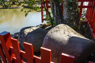 鶴岡八幡宮の政子石の写真素材 [FYI04813668]