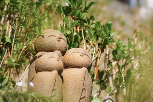 長谷寺の良縁地蔵と紫陽花の新緑の写真素材 [FYI04813676]