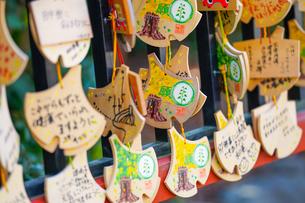 鶴岡八幡宮の大イチョウ絵馬の写真素材 [FYI04813686]