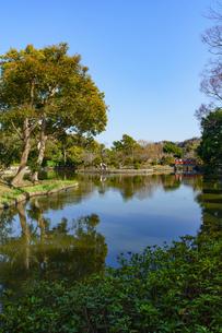 鶴岡八幡宮平家池と青空の写真素材 [FYI04813688]