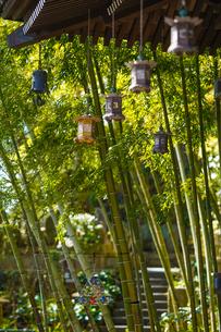 長谷寺の釣り灯籠と竹林の写真素材 [FYI04813691]
