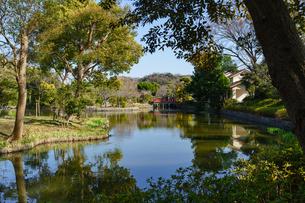 鶴岡八幡宮の平家池の写真素材 [FYI04813702]