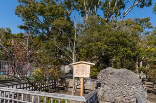鶴岡八幡宮のさざれ石の写真素材 [FYI04813712]