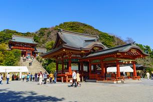 青空と鶴岡八幡宮の写真素材 [FYI04813715]