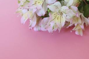 アルストロメリアの花束の写真素材 [FYI04813818]