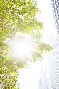 武蔵小杉の高層マンション群と新緑の写真素材 [FYI04814005]