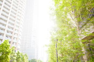 武蔵小杉の高層マンション群と新緑の写真素材 [FYI04814006]