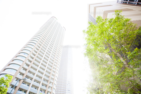 武蔵小杉の高層マンション群と新緑の写真素材 [FYI04814008]