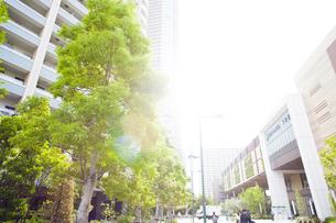 武蔵小杉の高層マンション群と新緑の写真素材 [FYI04814009]