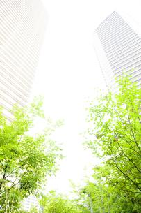 武蔵小杉の高層マンション群と新緑の写真素材 [FYI04814016]
