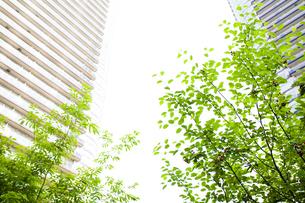 武蔵小杉の高層マンション群と新緑の写真素材 [FYI04814017]