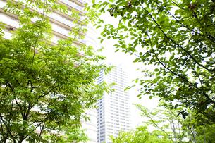 武蔵小杉の高層マンション群と新緑の写真素材 [FYI04814018]