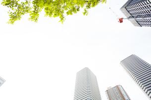 武蔵小杉の高層マンション群と新緑の写真素材 [FYI04814022]