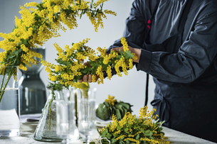 Woman placing bouquet of mimosa on a dining table.の写真素材 [FYI04814238]