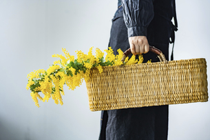 Woman holding bouquet of mimosa in the basket.の写真素材 [FYI04814243]