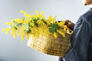 Woman holding bouquet of mimosa in the basket.の写真素材 [FYI04814246]