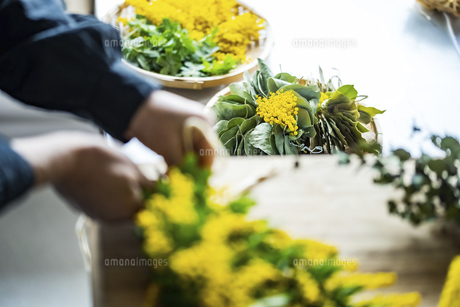 Woman making bouquet of mimosa. Modern lifestyle image.の写真素材 [FYI04814253]