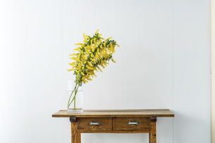 Bouquet of yellow mimosa flowers in a vase.の写真素材 [FYI04814257]