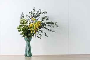 Bouquet of yellow mimosa flowers in a vase.の写真素材 [FYI04814260]