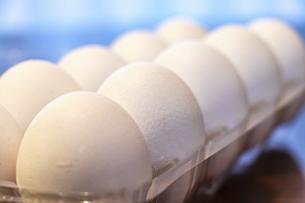 プラスチックのパックに詰められた白い卵の写真素材 [FYI04814521]