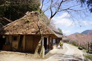 熊野古道中辺路の風景 継桜王子跡付近の写真素材 [FYI04814779]