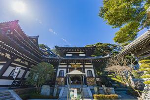 観音造立1300年を迎えた長谷寺の阿弥陀堂の写真素材 [FYI04814850]