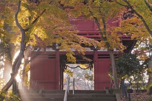 朝の光と紅葉 長谷山本土寺 仁王門の写真素材 [FYI04814875]
