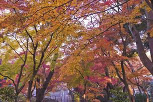 紅葉 長谷山本土寺の写真素材 [FYI04814877]