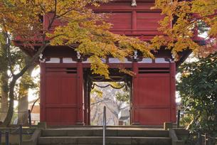 紅葉と仁王門 長谷山本土寺の写真素材 [FYI04814878]