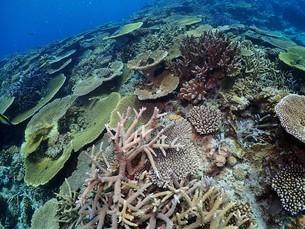 沖縄の珊瑚礁の写真素材 [FYI04815044]