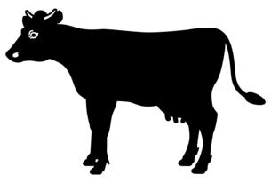 乳牛の全身イラスト【側面】のイラスト素材 [FYI04815355]
