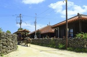 竹富島 水牛車と赤瓦民家の写真素材 [FYI04815584]
