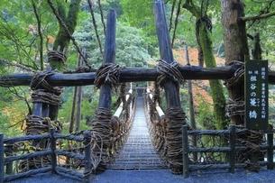かずら橋 徳島県の写真素材 [FYI04815609]