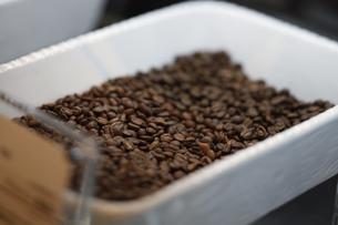 コーヒー豆の写真素材 [FYI04815984]
