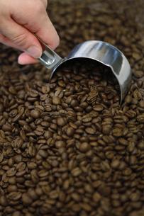 コーヒー豆の写真素材 [FYI04815985]