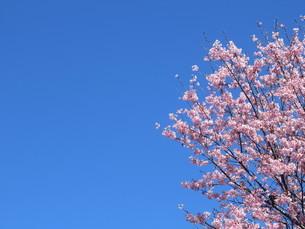 春の空の写真素材 [FYI04816093]