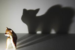 小さな仔犬のミニチュア が写し出す巨大な猛獣の影の写真素材 [FYI04816212]