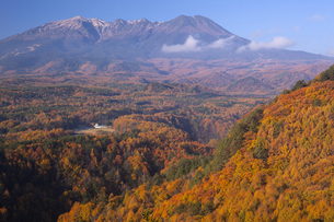 御嶽山とカラマツ黄葉の写真素材 [FYI04816657]