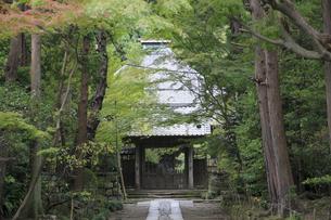 寿福寺の写真素材 [FYI04816668]