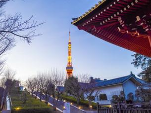 芝公園からのライトアップされた東京タワーの写真素材 [FYI04817246]